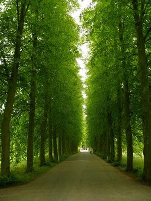 歩く瞑想に最適な道