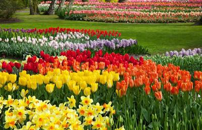 花の咲く公園