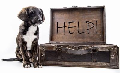 犬とメッセージ